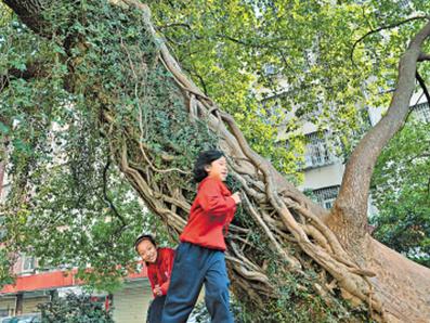 当地居民都围着大树周围