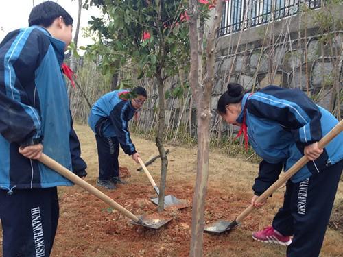 关于种树的介绍