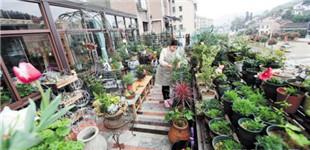 浏阳妹子在45平方米阳台上培植200多种花草