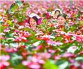 湖南桂东花卉扶贫        桂东县普乐镇太阳园艺花卉公司扶贫基地,村民在温室大棚培管红掌。