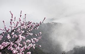 云海伴山花