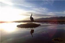黑颈鹤孵化影像