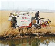 农民收割虾田稻