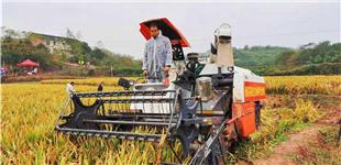 超世界纪录!超级稻亩产达3061.52斤 第三代杂交水稻突破亩产3000斤摸出一,这在普通生态双季稻属于重大突破已经聚。