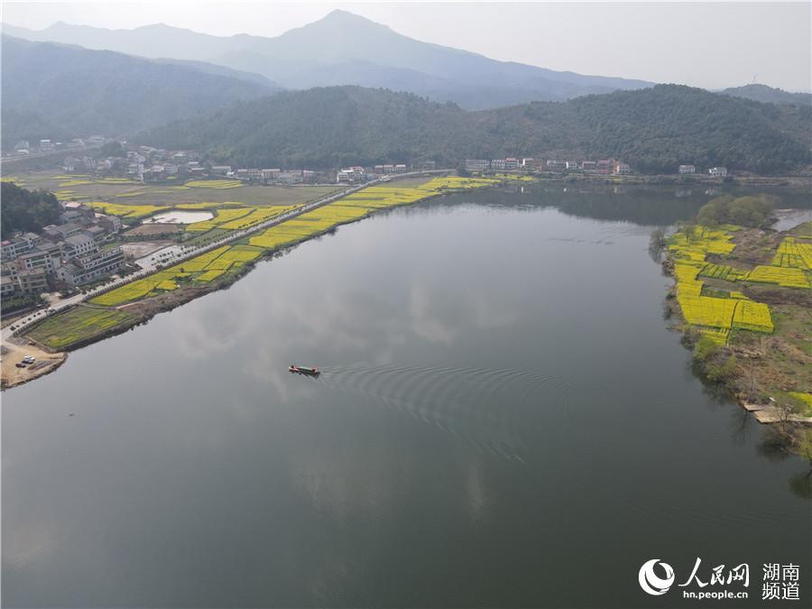 【人民网】衡东:千亩油菜花齐开 唤醒满河春水